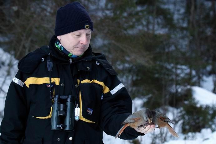 Jari Kiljunen ja kuukkeli (Perisoreus infaustus), Parikkala  © Harri Partanen